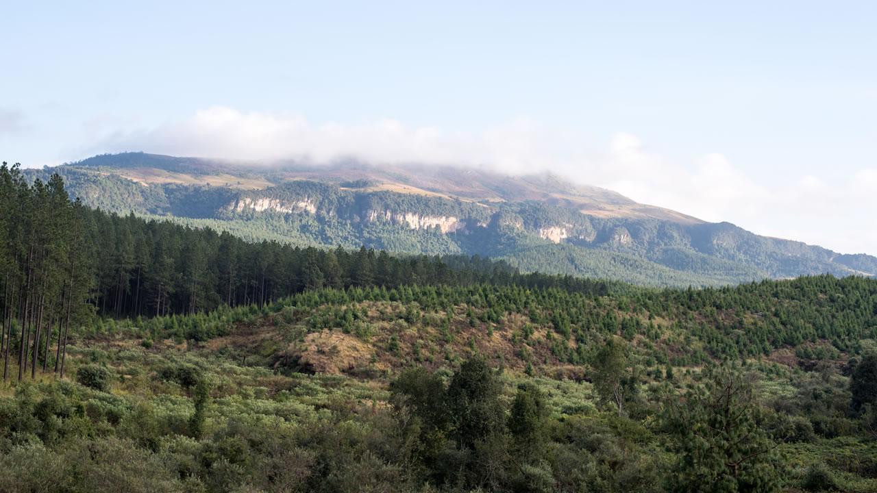 sa_forests