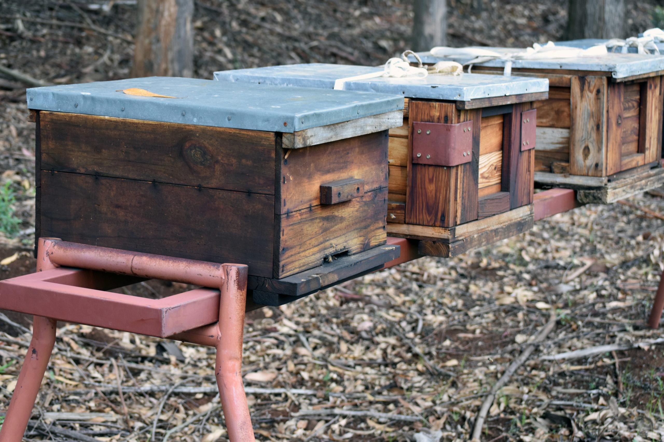 20 May – Celebrating World Bee Day