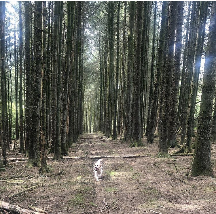 September newsletter – What does #ForestryFun looks like to you