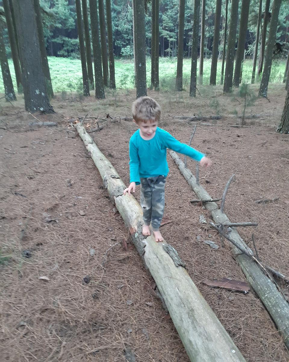 November newsletter – #ForestryFun finalists