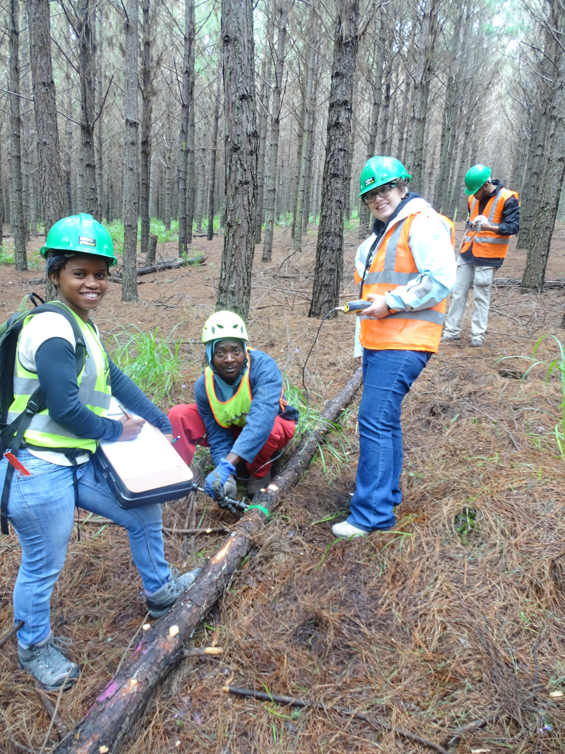 October newsletter – Role models for the future of forestry