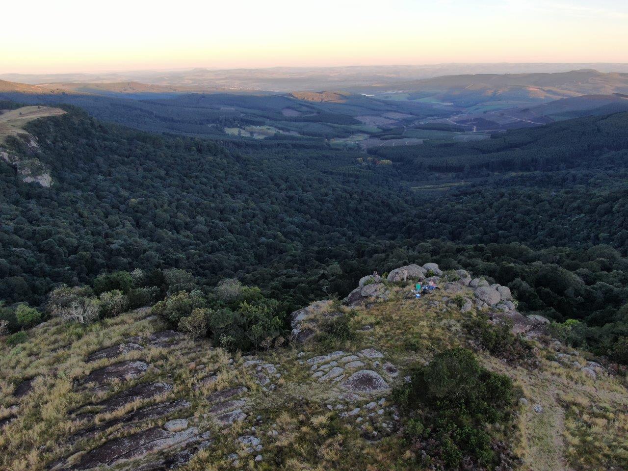 Enon Mistbelt indigenous forest - Lance Bartlett