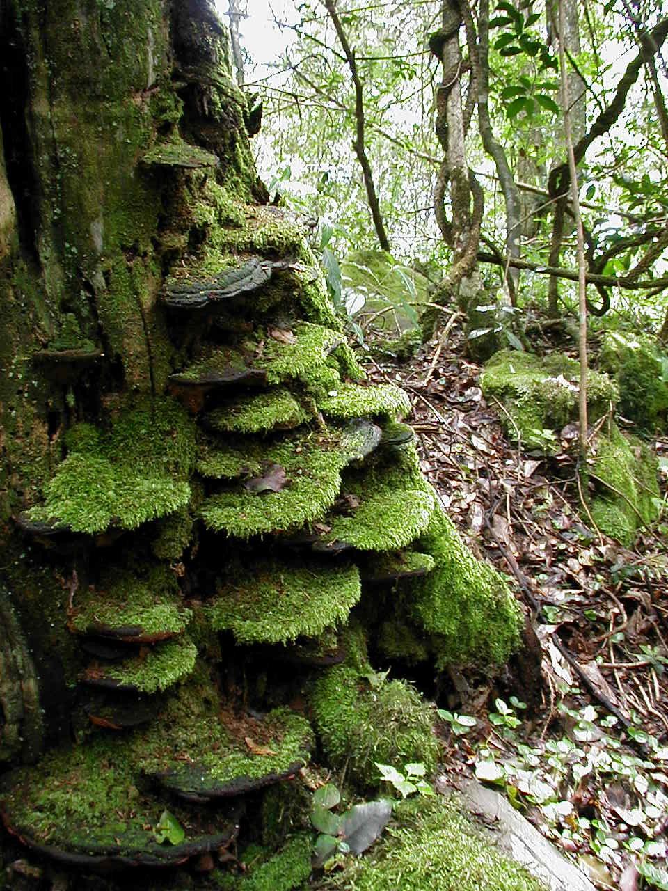 Sappi's Pedlars Bush Forest - Peta Hardy