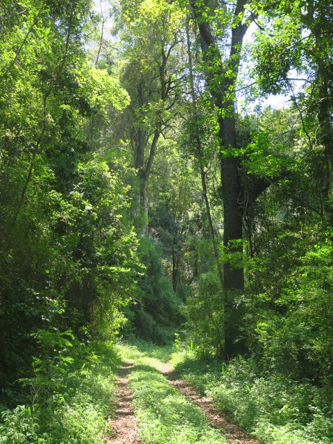 Sappi's Pedlar's Bush Forest - Peta Hardy